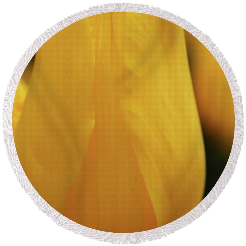 Connie Handscomb Round Beach Towel featuring the photograph Bold As Brass by Connie Handscomb
