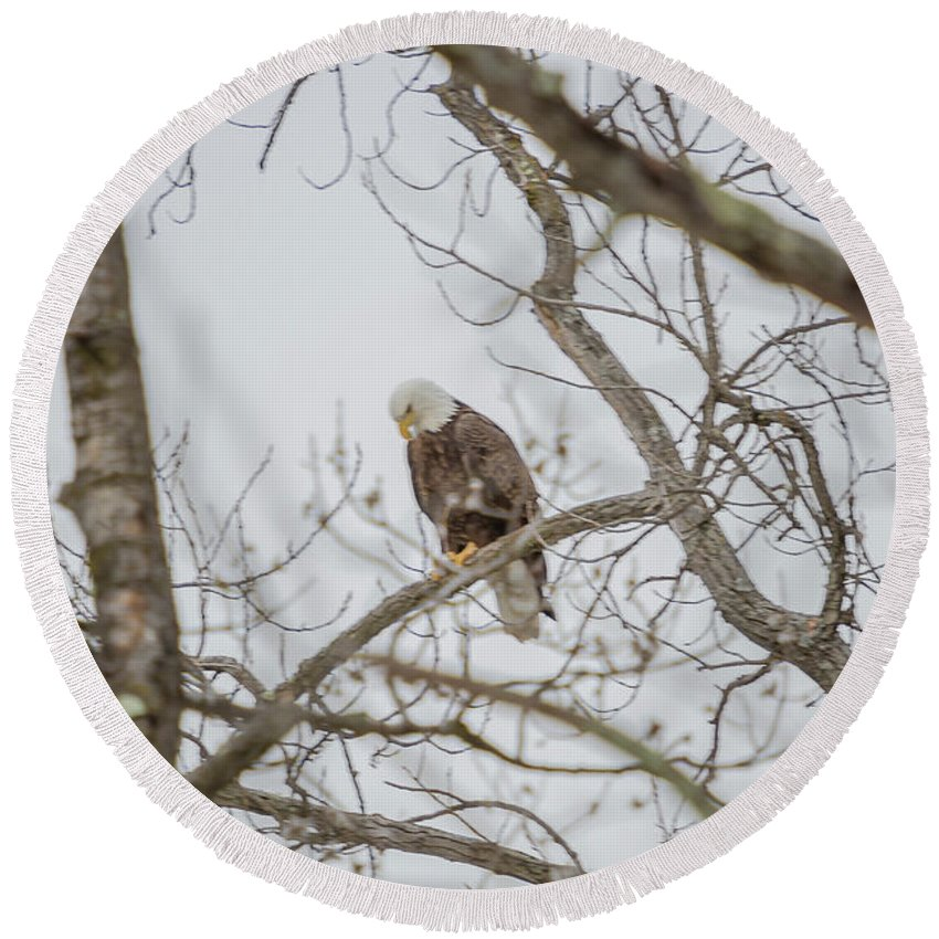 Eagle Round Beach Towel featuring the photograph Bowing by Barbara Blanchard