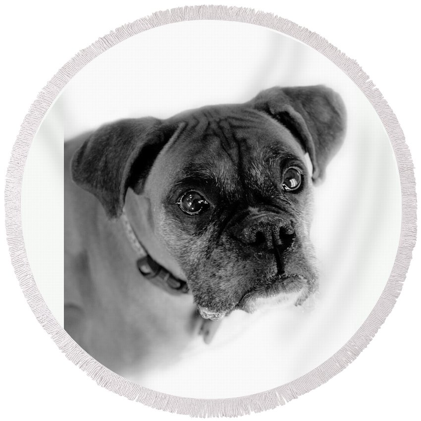 Boxer Round Beach Towel featuring the photograph Boxer Dog by Marilyn Hunt