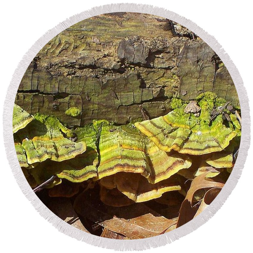 Tree Round Beach Towel featuring the photograph Bracket Fungus by Nature's Effects - Heather Seward