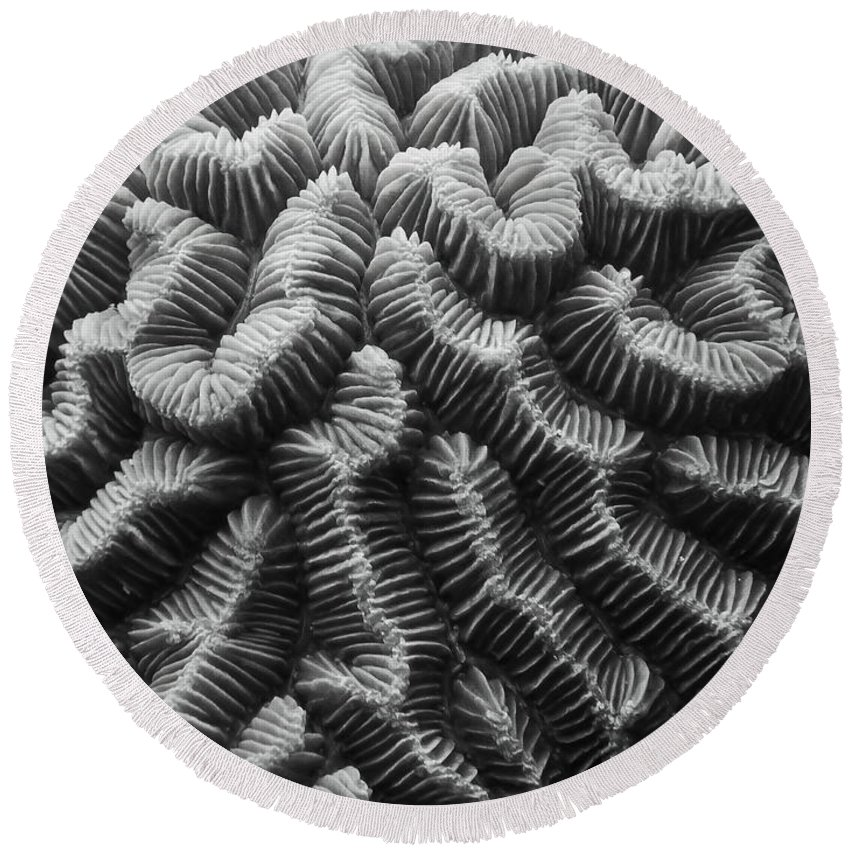 Brain Coral Round Beach Towel featuring the photograph Brain Coral Details by Roupen Baker