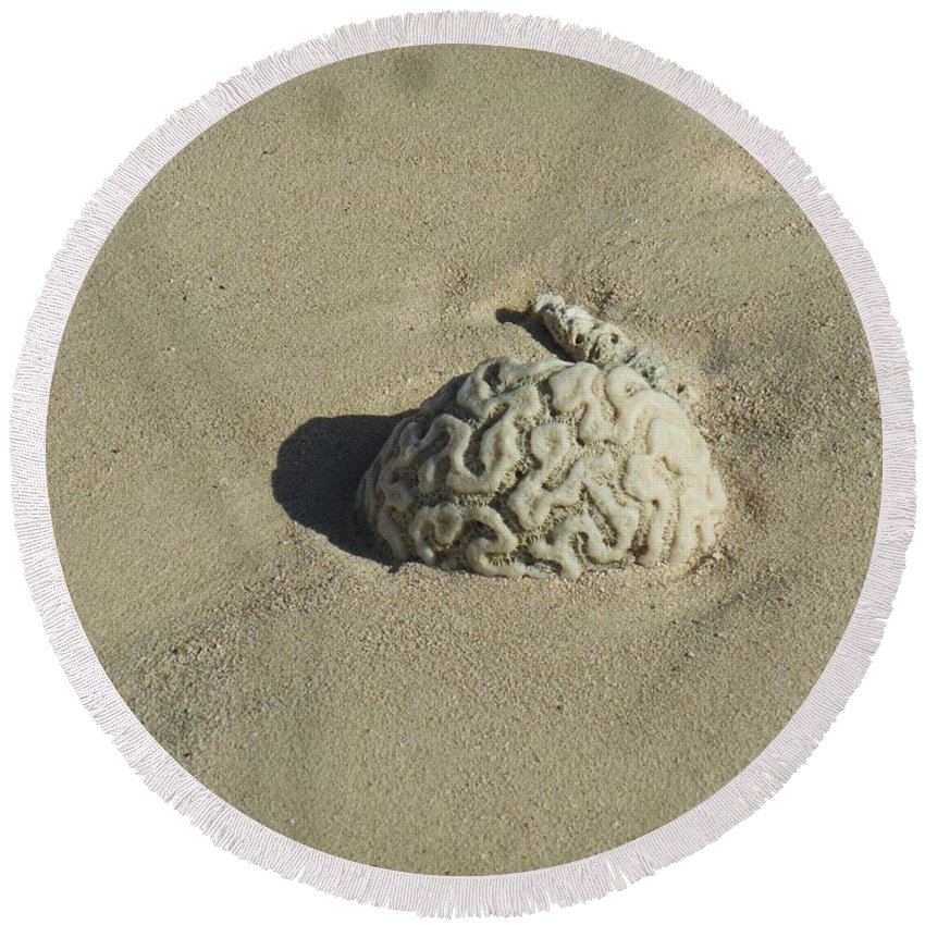 Coral Round Beach Towel featuring the photograph Brainzzzz by Chad Kroll