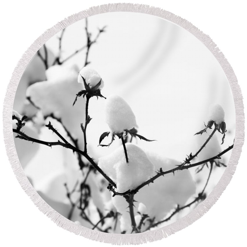 Branches Round Beach Towel featuring the photograph Branches by Amanda Barcon