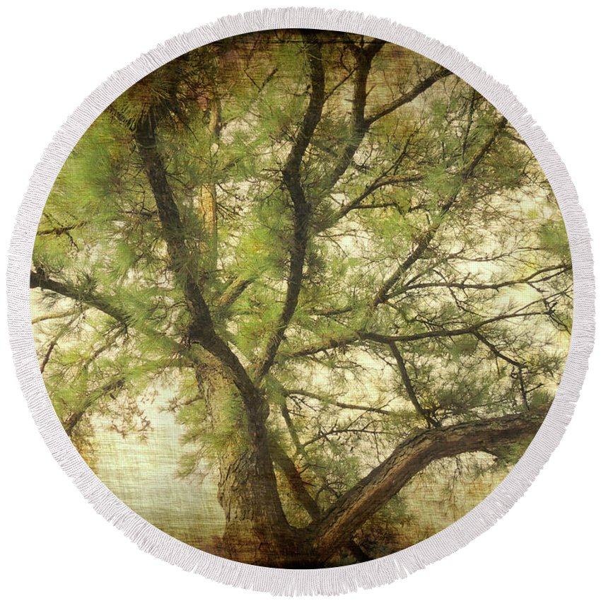 Unique Round Beach Towel featuring the photograph Branching Upward by Lydia Holly