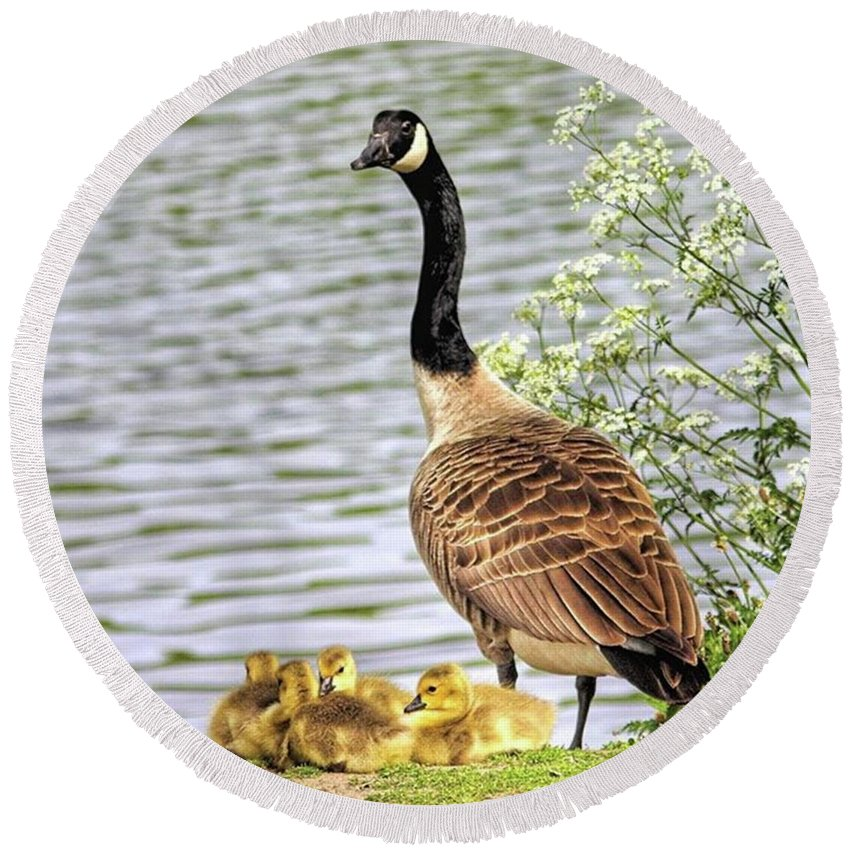 Geese Round Beach Towel featuring the photograph Branta Canadensis  #canadagoose by John Edwards