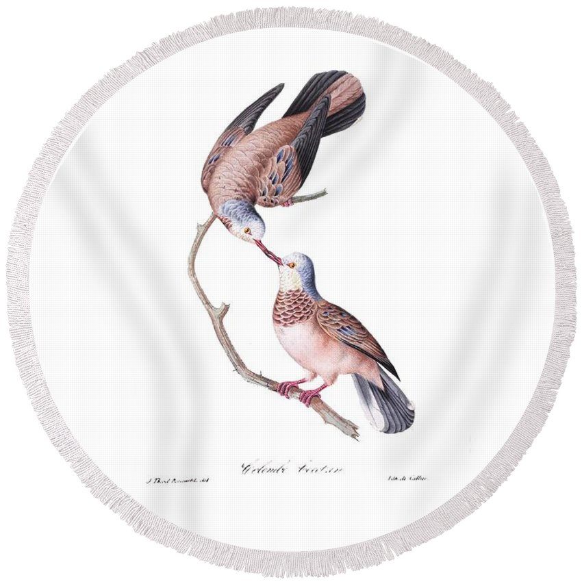 Brazilian Round Beach Towel featuring the painting Brazilian Birds by Philip Ralley