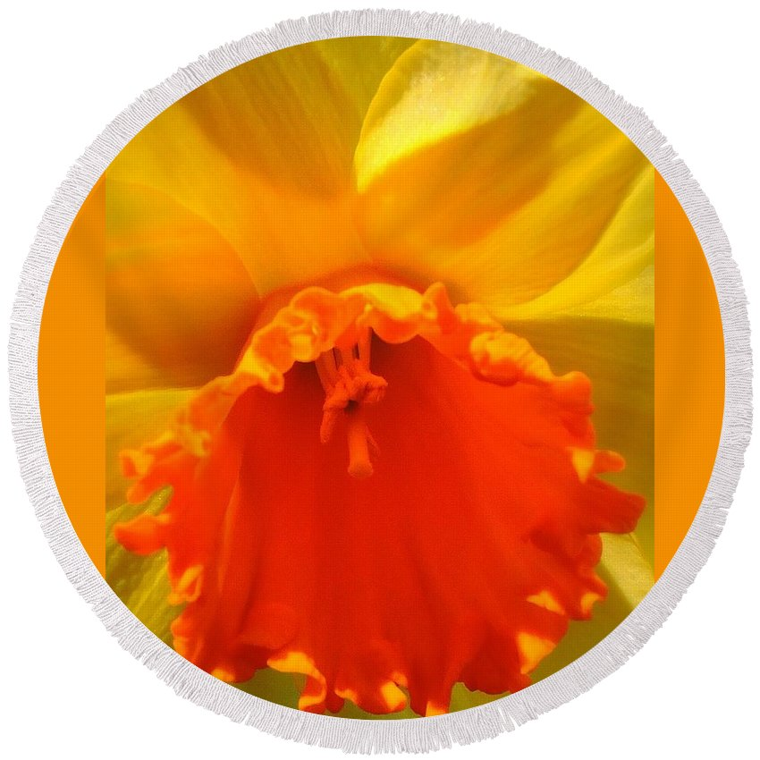 Daffodil Round Beach Towel featuring the photograph Bright, Bold Daffodil by Peg Donnellan