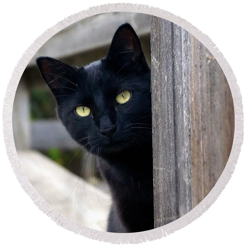 Cat Round Beach Towel featuring the photograph Bright Eyed Kitty by Tracey Vivar