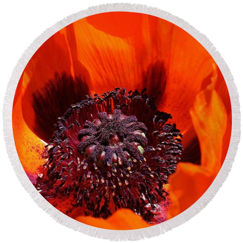 Flora Round Beach Towel featuring the photograph Brilliant Poppy by Bruce Bley