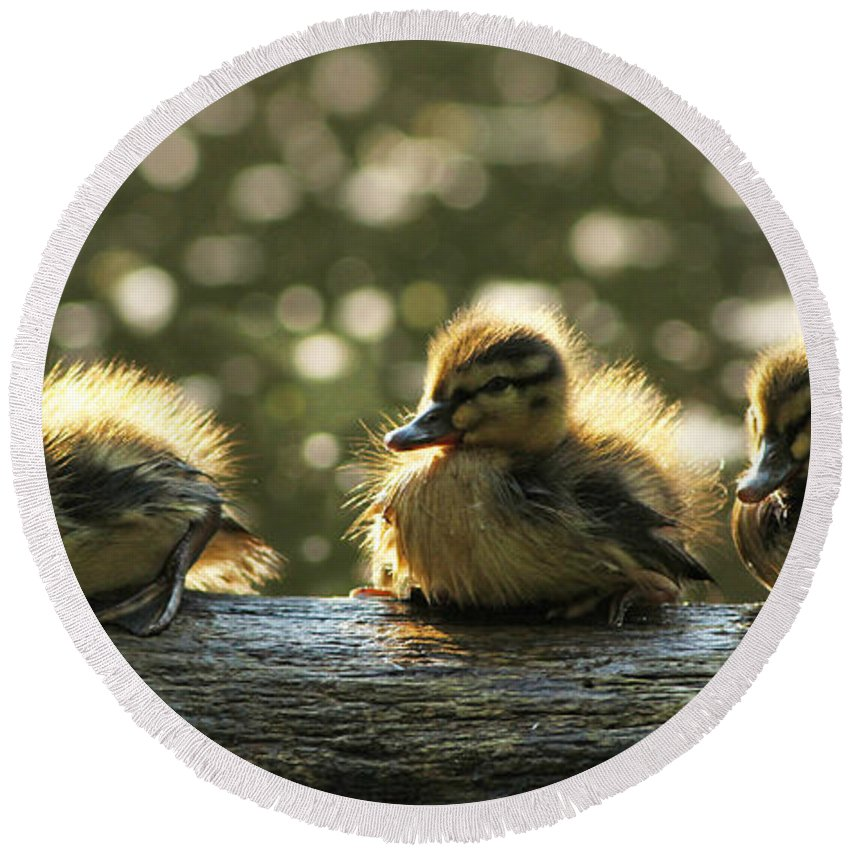 Ducklings Round Beach Towel featuring the photograph Brothers by Mircea Costina Photography