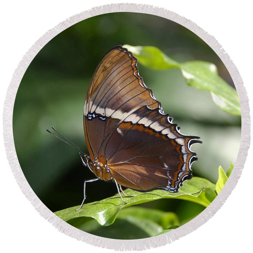 Butterfly Round Beach Towel featuring the photograph Brown Beauty by David Lee Thompson