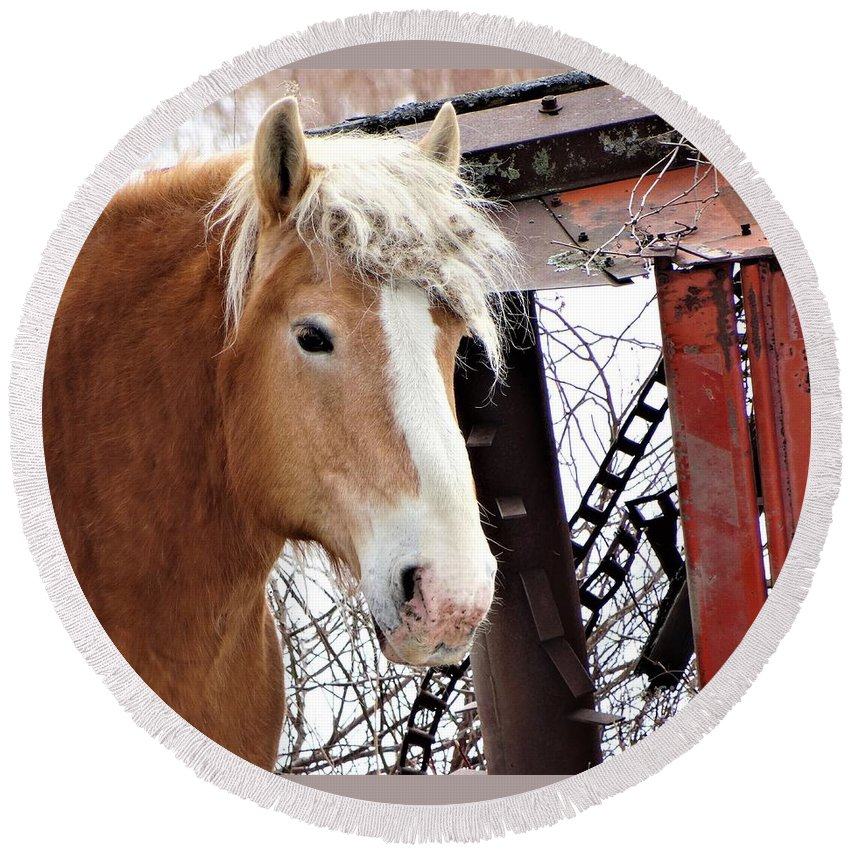 Workhorse Vermont Farming Round Beach Towel featuring the photograph Brown Eyes by Karen Velsor