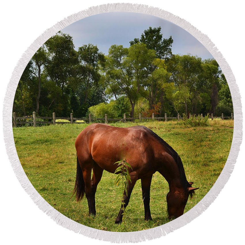 Brown Horse Round Beach Towel featuring the photograph Brown Horse In Holland by Amy Lucid