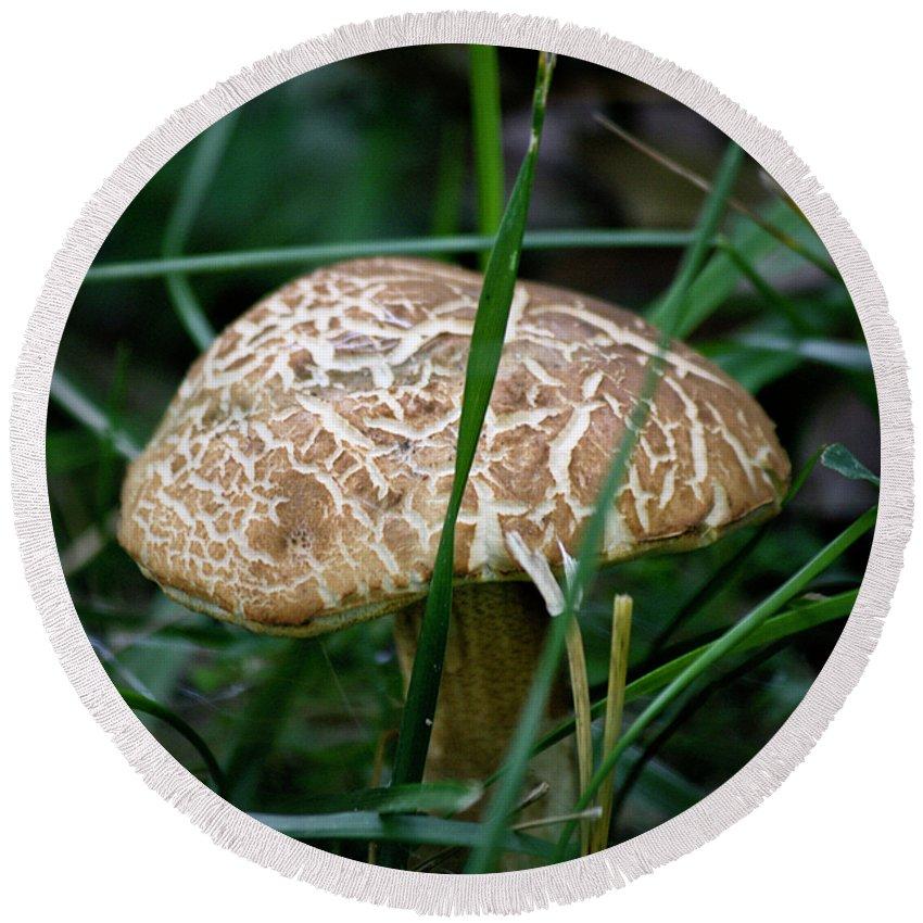 Fungus Round Beach Towel featuring the photograph Brown Mushroom Squared by Teresa Mucha