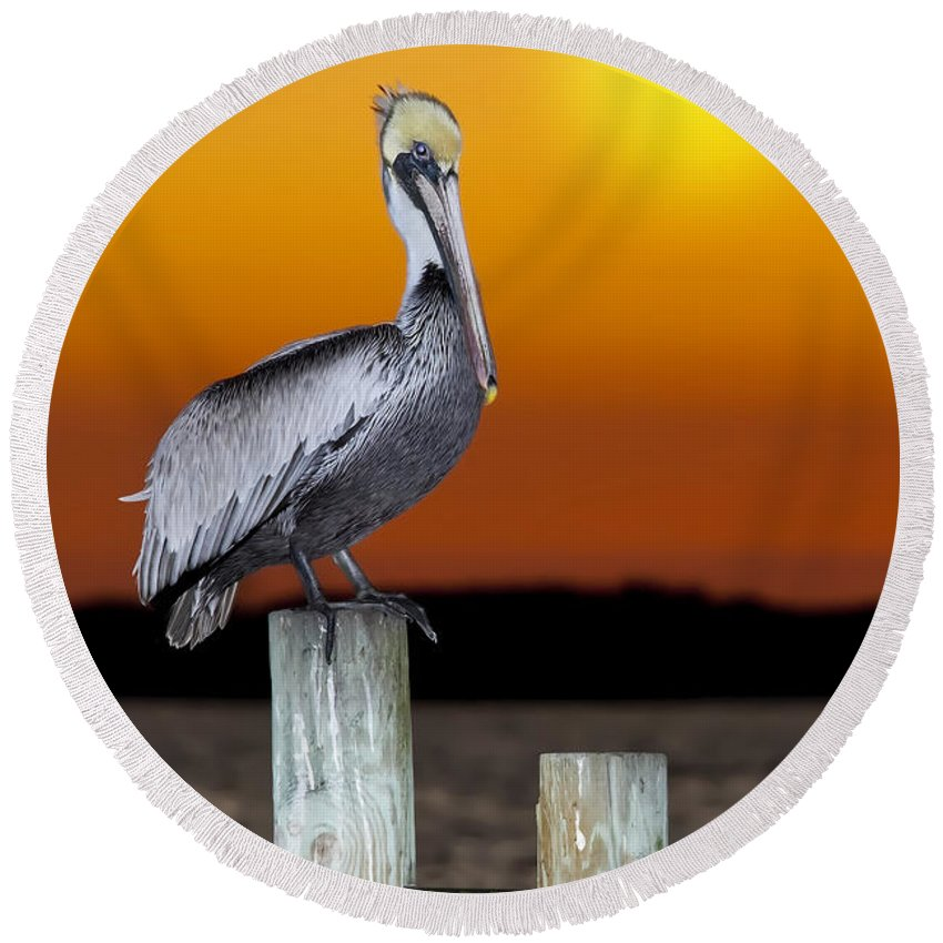 Brown Pelican Round Beach Towel featuring the photograph Brown Pelican by Janet Fikar