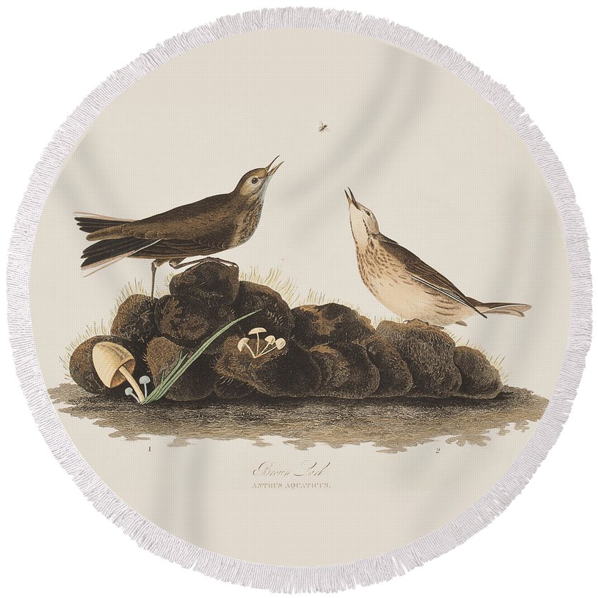 Brown Titlark Round Beach Towel featuring the painting Brown Titlark by John James Audubon