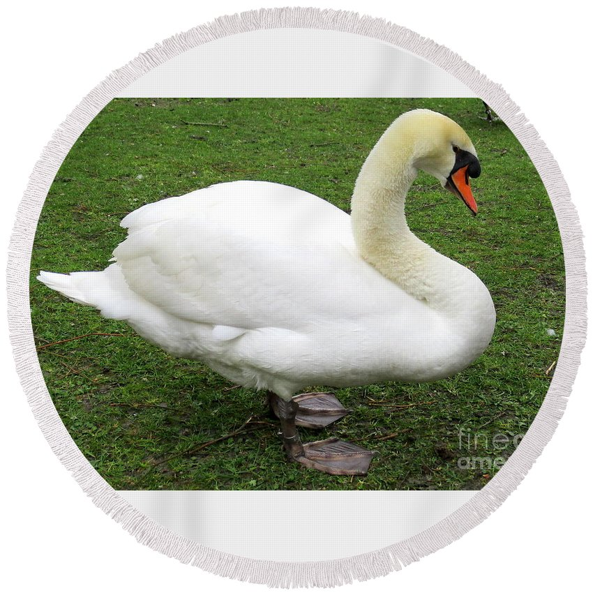 Swan Round Beach Towel featuring the photograph Bruges Swan 1 by Randall Weidner