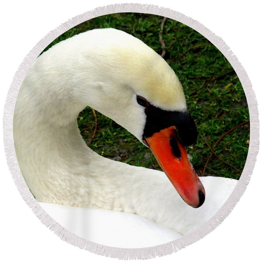 Swan Round Beach Towel featuring the photograph Bruges Swan 2 by Randall Weidner