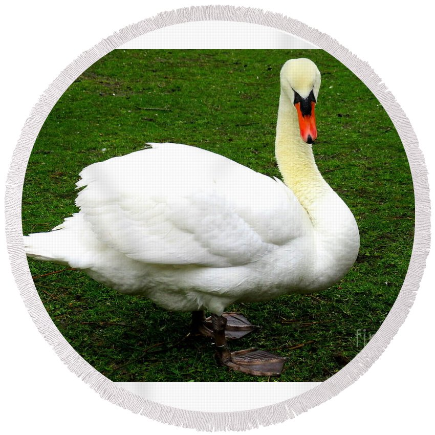 Swan Round Beach Towel featuring the photograph Bruges Swan 3 by Randall Weidner