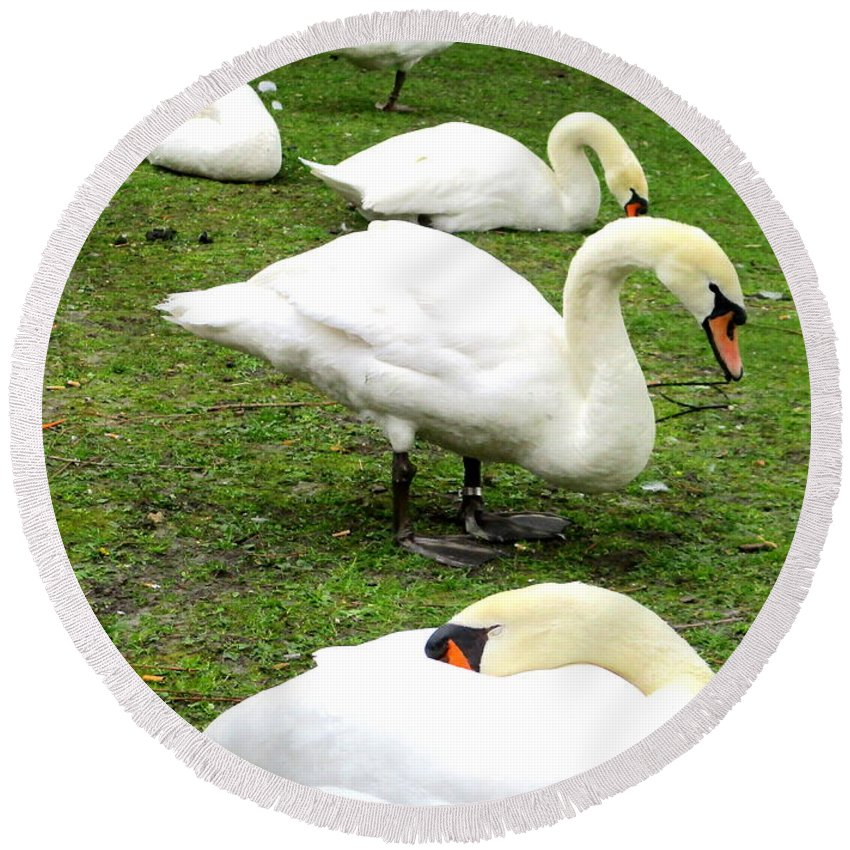 Swan Round Beach Towel featuring the photograph Bruges Swans 2 by Randall Weidner