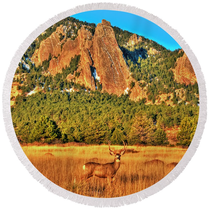 Deer Round Beach Towel featuring the photograph Buck And Flatirons by Scott Mahon
