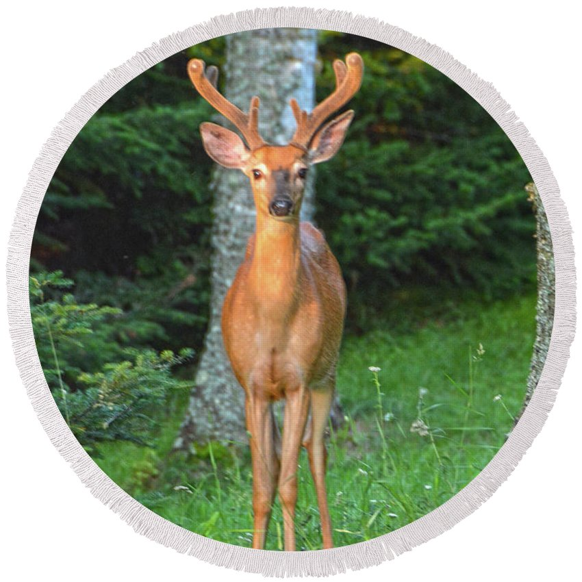 Buck Round Beach Towel featuring the photograph Buck Standing Tall by Christine Dekkers
