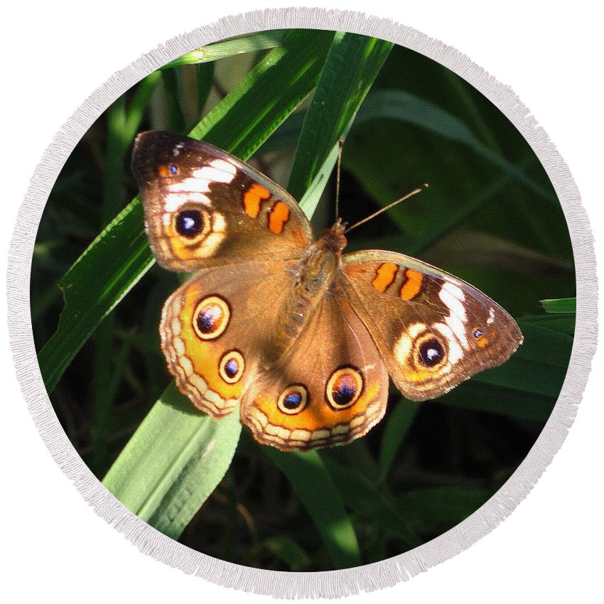 Buckeye Butterfly Images Buckeye Butterfly Prints Rare Butterfly Prints Entomology Colorful Eye Spots Maryland Butterfly Images Maryland Butterfly Prints Forest Ecology Biodiversity Conservation Nature Colorful Critter Prints Round Beach Towel featuring the photograph Buckeye Butterfly by Joshua Bales