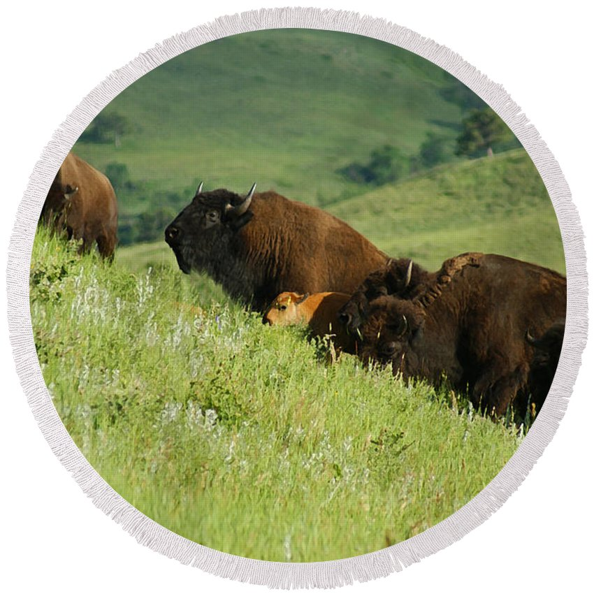 Animals Round Beach Towel featuring the mixed media Buffalo On Hillside by Ernie Echols