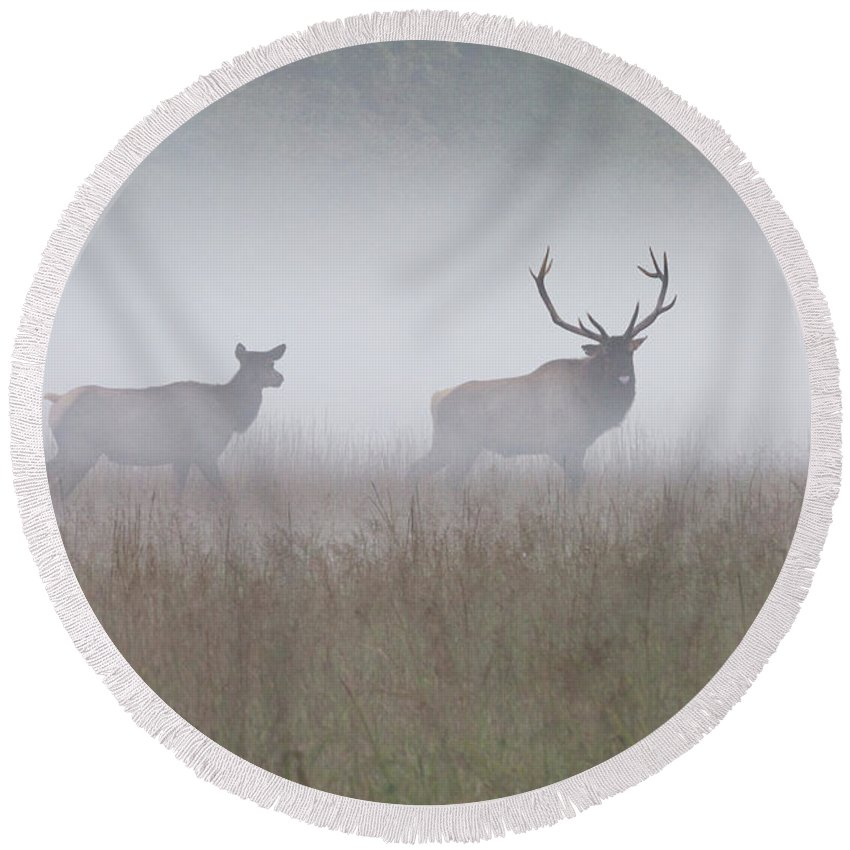 Elk Round Beach Towel featuring the photograph Bull And Cow Elk In Fog - September 30 2016 by D K Wall