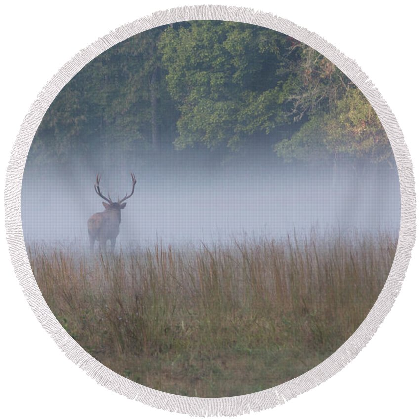Elk Round Beach Towel featuring the photograph Bull Elk Disappearing In Fog - September 30 2016 by D K Wall