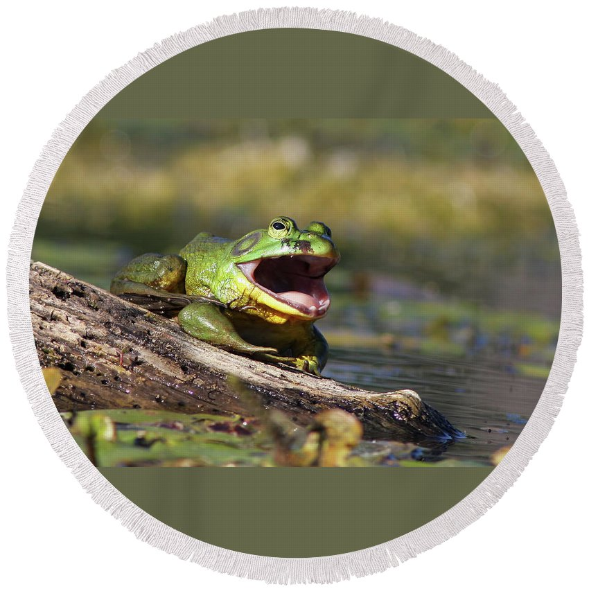 Amphibian Round Beach Towel featuring the photograph Bull Frog by Mircea Costina Photography