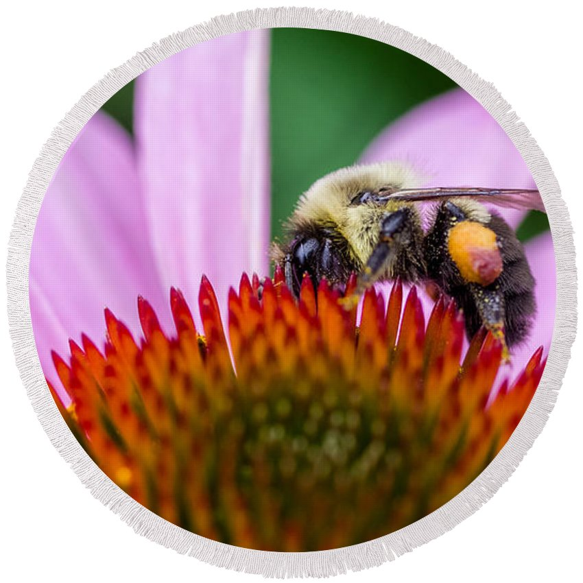 D Fa 50 2.8 Round Beach Towel featuring the photograph Bumblebee On Coneflower by Lori Coleman