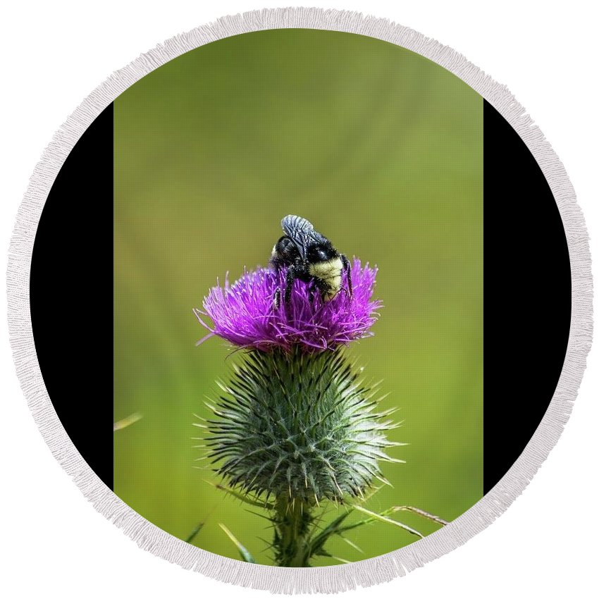 Bumblebee Round Beach Towel featuring the photograph Bumblebee On Thistle by Eric Strickland