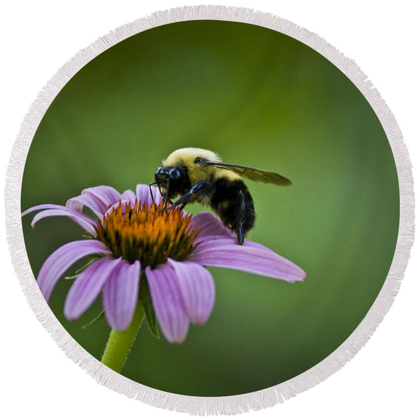 Bumblebee Round Beach Towel featuring the photograph Bumblebee by Teresa Mucha