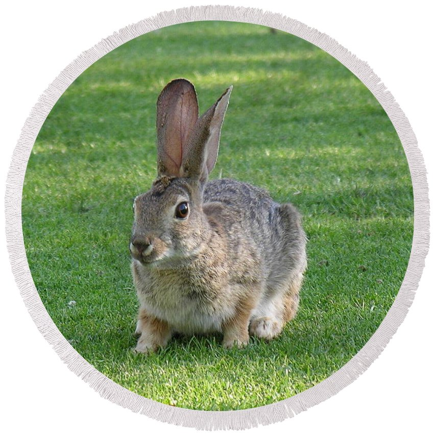 Bunny Round Beach Towel featuring the photograph Bunny by Diane Greco-Lesser