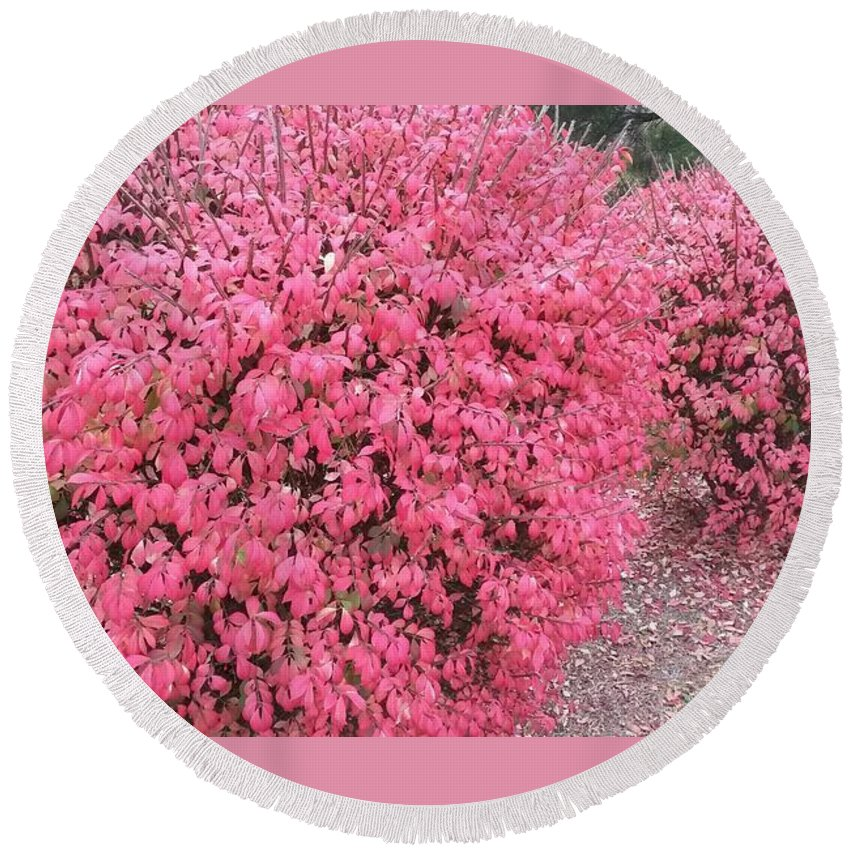 Bushes Round Beach Towel featuring the photograph Burning Bushes by Maxine Billings