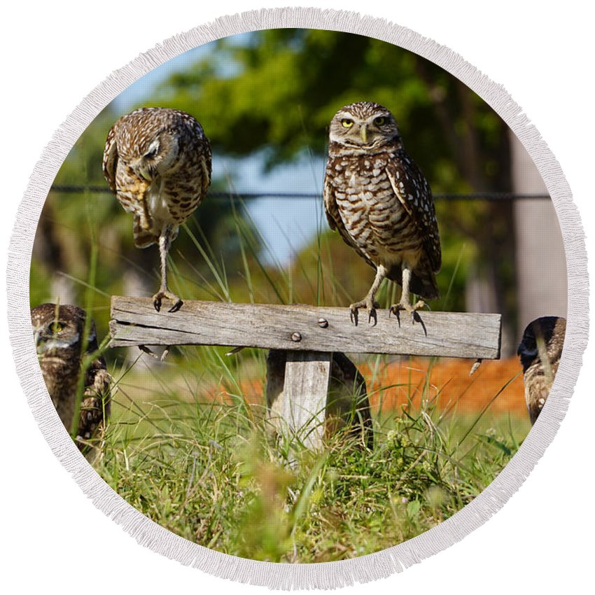 Owls Round Beach Towel featuring the photograph Burrow Family by Joey Waves