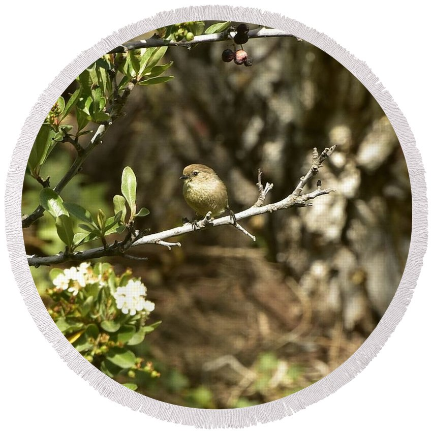 Linda Brody Round Beach Towel featuring the photograph Bushtit On Branch In The Sun by Linda Brody