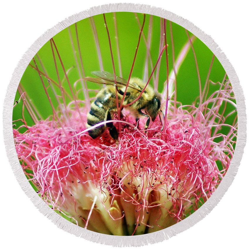 Nature Round Beach Towel featuring the photograph Busy Bee by Holly Kempe