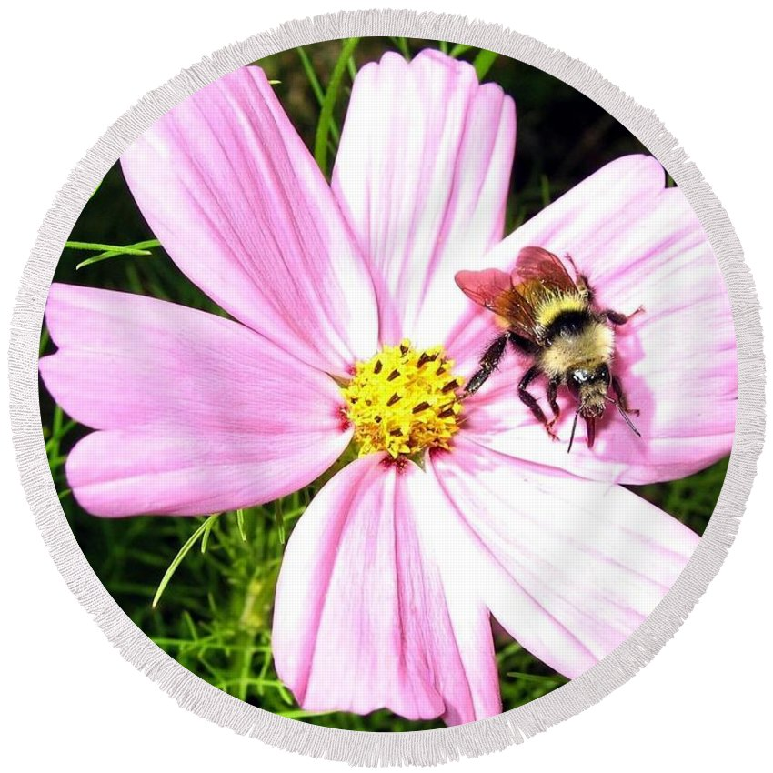 Bee Round Beach Towel featuring the photograph Busy Bee by Will Borden