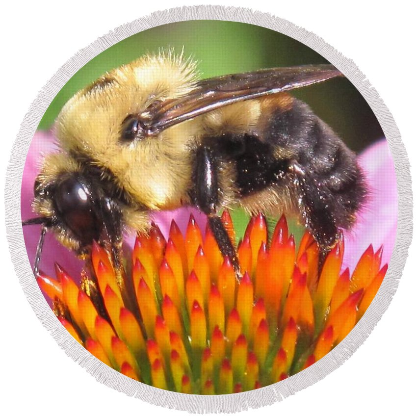 Bee Round Beach Towel featuring the photograph Busy by Ian MacDonald
