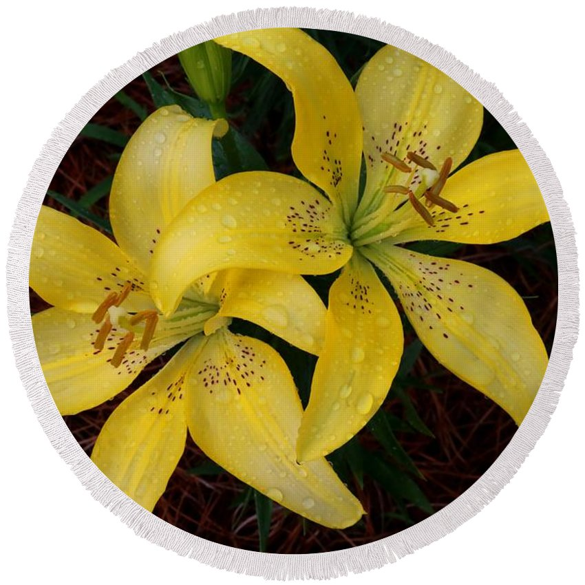 Lilies Round Beach Towel featuring the photograph Buttercream Lilies by Kathryn Meyer