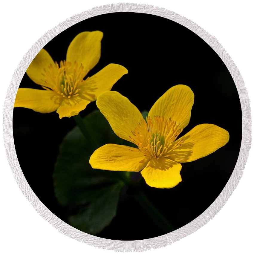 Nature Round Beach Towel featuring the photograph Buttercups by Crystal Massop