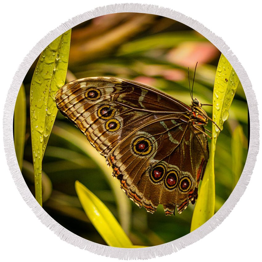 Butterfly Round Beach Towel featuring the photograph Butterfly 25 by Larry White