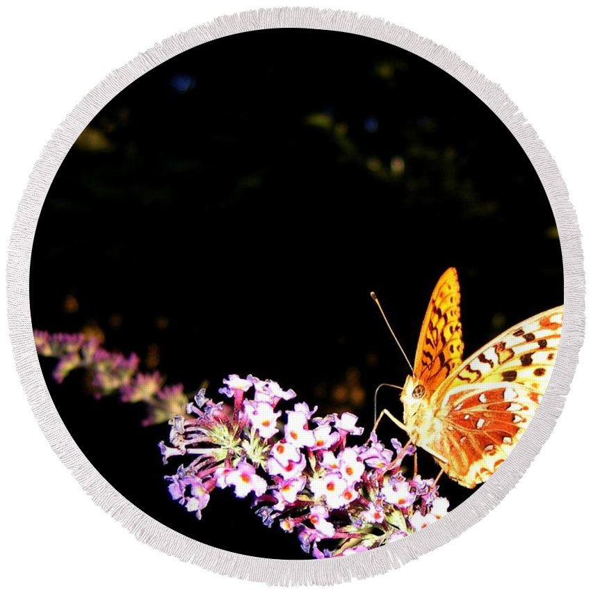 Butterfly Round Beach Towel featuring the photograph Butterfly Banquet 1 by Will Borden