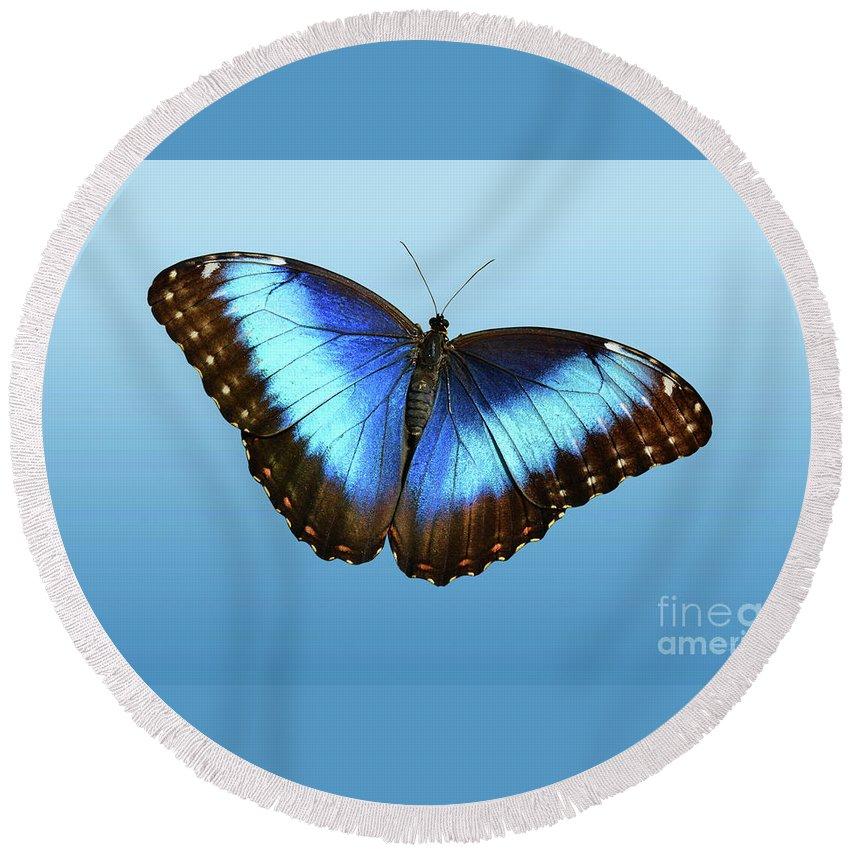 Butterflies Round Beach Towel featuring the photograph Blue Morpho Beauty by Jann Denlinger