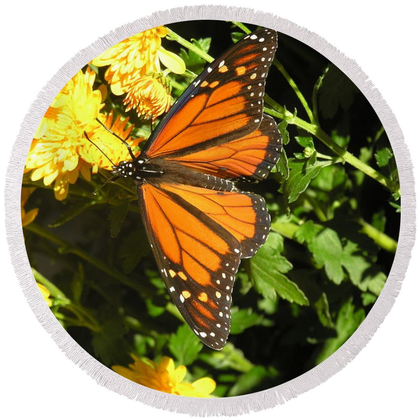 Butterfly Round Beach Towel featuring the photograph Butterfly by Diane Greco-Lesser