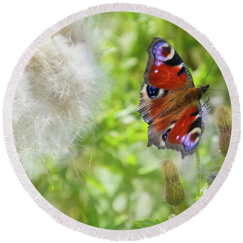 Butterfly Round Beach Towel featuring the photograph Butterfly by Hans Erik Nielsen