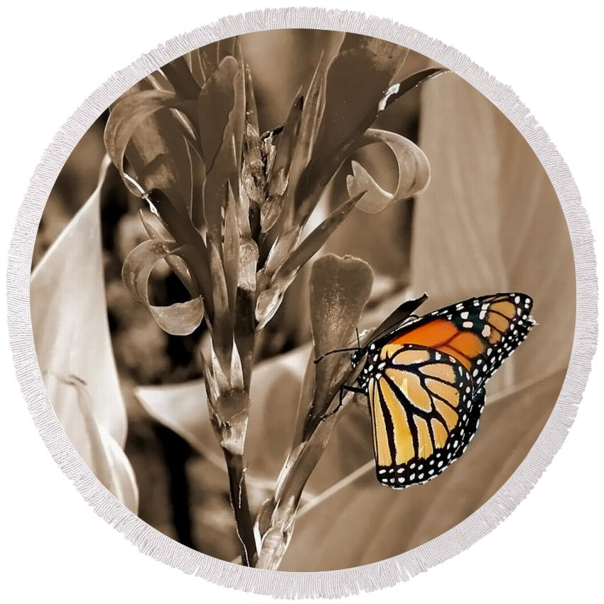 Macro Round Beach Towel featuring the photograph Butterfly In Sepia by Lauren Radke