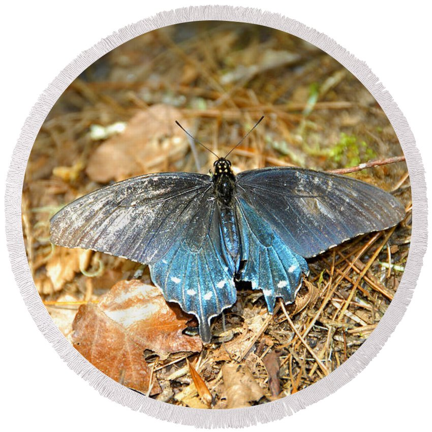 Butterfly Round Beach Towel featuring the photograph Butterfly In The Forest by David Lee Thompson